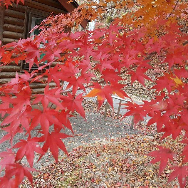 島根県でしょうか 益田に向かう道中です#紅葉#綺麗#わらべうたベビーマッサージ#益田