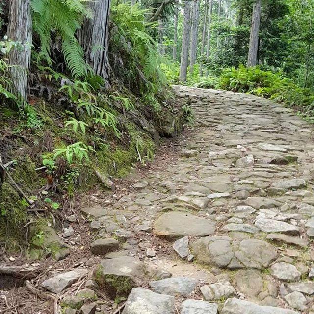 ウグイスが鳴いています、耳を済ましてきいてごらん#熊野古道#素敵な1日#汗流しました#奥田さん#わらべうたベビーマッサージ