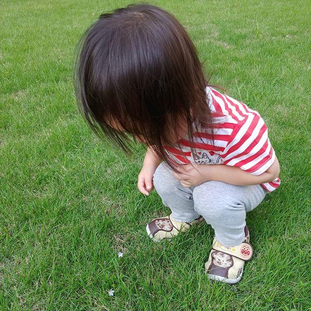 【ママの子育て奮闘記】大阪は雨が続いています。昨日の保育園の帰り、娘が家の下の芝生で小さいお花を発見しましたしゃがみこんで「おあなやー!(お花やー!)」と言っていました1歳8ヶ月にして関西弁が出てきました(笑)そのまましばらくお花を眺めて、お家に帰りましたこの頃の言葉の発達はものすごく早く、母親の私の方がついていけていないです(笑)わらべうたベビーマッサージ研究会事務員 森#ベビーマッサージ #わらべうた #わらべうたベビーマッサージ #切れ目ない子育て #習い事 #赤ちゃんと習い事  #赤ちゃんのいる生活#親子の絆 #泣かずにできるベビーマッサージ #助産師考案#ベビーマッサージ資格 #1歳8ヶ月 #女の子 #女の子ママ #子育て奮闘記