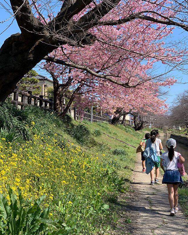 【お散歩で気分転換♪元気補充】 みなさんこんにちは自由にいつも通り行動できず少しイライラや疲れが溜まっていらっしゃる方もいるかもしれませんねそんな時はお散歩で春探しがオススメです空から太陽から土からエネルギーをたくさん貰えます♪わたしは、ハコベやオオイヌノフグリなどの春の雑草が大好き癒しや元気のパワーがみなさんに届きますようにっ早く事態が落ち着き、全国の講習会で皆さまとお会い出来ることを楽しみにしております🥰 わらべうた産後ダンス インストラクターティーチャー 飯山🤩#わらべうたベビーマッサージ #わらべうた産後ダンス #わらべうた #ベビーマッサージ #ベビー #赤ちゃん #子育て #子連れ #お出かけ#骨盤#産後エクササイズ