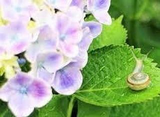 【大雨を想定したコロナ対策】紫陽花は雨に濡れた姿が一番美しい花。この時期心癒されます。紫陽花の美しいスポットに出かけたいな、と思うこの頃です。コロナ感染予防を意識した生活様式にも少しずつ慣れてきました。これから心配なのは、集中豪雨や台風での避難。避難場所でのコロナ感染予防です。今のうちに、冷静に、避難場所へ持参するものを考えておくと良いですねどのご家庭にも、非常時持ち出し品の用意があると思うのですが、それにプラスしておくと良いもののご紹介です* マスク(タオル等)* アルコール消毒液(ウェットティッシュ等)* 体温計* スリッパ使い捨てマスクがまた手に入りやすくなりました。今のうちに買っておくと良いかもしれません。また、これまでの災害では必須ではなかったスリッパ避難所内の通路を歩くときなどあると良いそうです。靴下や足の裏にウイルスが付着し、これを居住空間に持ち込むことで、接触感染のリスクが高まるためとのこと。気持ち的にも物質的にも、ゆとりがある時に、もしものための備えについてちょっと考えてみること、オススメです記:村松晶子(脳活わらべうたティーチャー・静岡)#わらべうたベビーマッサージ #わらべうたキッズマッサージ #わらべうた産後ダンス #わらべうた胎教 #脳活わらべうた #オンライン講習会 #オンライン教室 #資格取得 #今できること #コロナ感染拡大予防 #豪雨