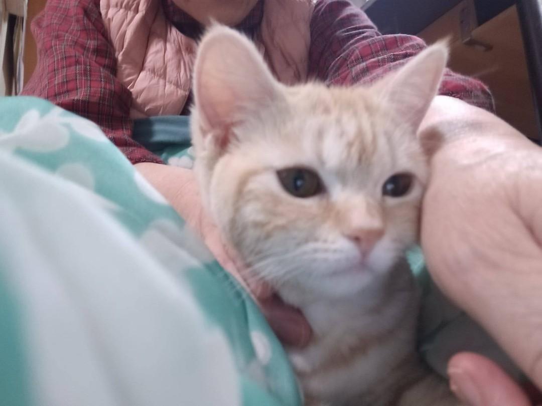 「猫もあららハーツ気持ちいいニャー」猫に歌ってあげましたら静かにさせてくれます。猫さえ喜ぶなら赤ちゃんはもっと喜ぶと思いますニャー ♪動画はこちらですhttps://www.jyosansi.com/youtube/癒し系の何番でしょうか?チャンネル登録お願いいたします#猫 #動物 #動画 #ユーチューブ#ベビーマッサージ #子育て #自宅でできる #赤ちゃん #赤ちゃんのいる生活 #WEB ##親子の絆作り #わらべうた(Instagram)