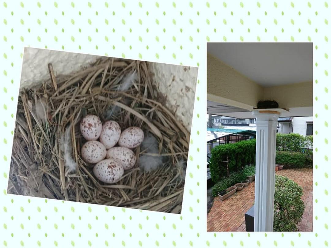 【ツバメの巣は幸運の訪れ】我家の玄関にツバメが巣を作りました親鳥がいないのを確認して撮影したところ、卵が6つ昨年も巣を作っていたのですが、柱が滑るようで完成しなかったので、今年は、安定できる土台を作ると無事完成ツバメの巣は、幸運をもたらしてくれるといわれているので、ワクワクしていますどんな幸運?コロナが早く終息して、以前の生活に戻れるといいなぁ       おおくぼ#つばめ #ツバメの巣 #幸運 #産後ケア  #わらべうたベビーマッサージ #産後ダンス #胎教 #妊婦 #ベビーセミナー #産後ケア #オンラインセミナー #親子のふれあい #楽しい子育て #キッズマッサージ #ベビーザらス #0歳 #1歳 #オンライン体験 #オンラインセミナ(Instagram)